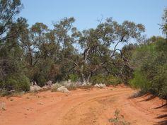 Australian bush tracks....
