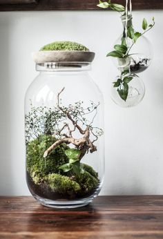 Piękno natury uchwycone wszklanym naczyniu. Justyna Stoszek tworzy naturalne dzieła sztuki.