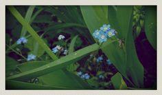 Little blue 3