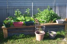 My 4x8 ft box garden with 3 kinds of tomatoes, 4 kinds of lettuce, carrots, cucumbers, yellow squash, bell peppers, collard greens, and radishes.