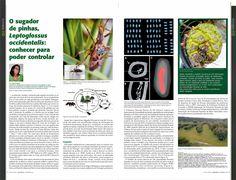 Artigo escrito pela investigadora do CEF, Ana Farinha, para a revista Voz do campo e que foi incluido no suplemento Agrociência de Dezembro 2016.