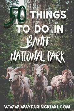 Banff National Park is the perfect place to visit if you're on a budget. Here are 50 cheap and free things to do in Banff National Park in Rocky Mountains, Banff National Park, National Parks, Jasper National Park, American Express Rewards, Vancouver, Travel Insurance Reviews, Wild Campen, Banff Canada