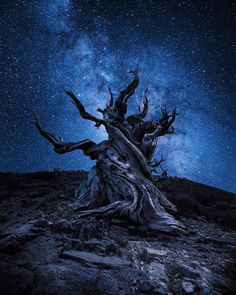 The gnarliest tree in the world. at least I've seen lol. First shot with milky way and second with a zoom effect applied in post. Milky Way Photography, Landscape Photography, Nature Photography, Night Photography, Landscape Photos, Amazing Photography, Travel Photography, Totoro, Bristlecone Pine