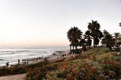 La Jolla, CA 2017 #lajolla #sandiego #beach #beachphotography #palmtrees #ocean #canon #canonusa #canoneosm5 #hobbyphotographer #lajollalocals #sandiegoconnection #sdlocals - posted by Elisa G  https://www.instagram.com/e_gee_00. See more post on La Jolla at http://LaJollaLocals.com