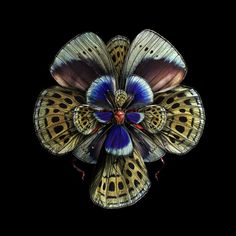 Though their components are natural, these are not photos of unusually beautiful flowers. This collection is fine art photographer Seb Janiak's latest project, in which he has manipulated photographs of insect wings to look like blooming flowers. The series, entitled Mimesis, was created without digital manipulation. Using no special effects, the artist utilized analog photography in combination with superimposition and photomontage to create the layered and hypnotic insect flowers…