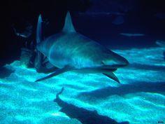 ocean life pics | ocean life wallpapers 25 - Beaches Rivers Oceans Photography Desktop ...