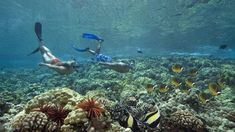 c803764fe54 Hawaii bans sunscreens deemed harmful to coral reefs. Arrecifes De ...