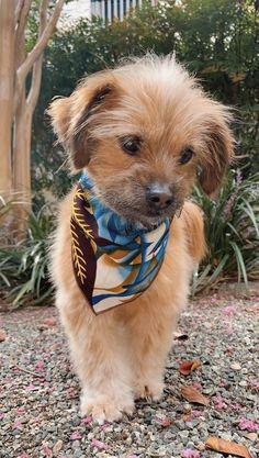 Cute Dog Mixes, Super Cute Puppies, Cute Baby Dogs, Cute Dogs And Puppies, Pet Dogs, Cute Small Dogs, Doggies, Pet 1, Baby Puppies