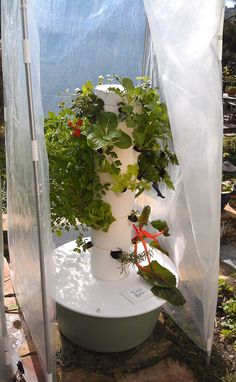 Tower Garden Season Extender and Edible Plant Protection Accessories and Seedlings Aquaponics Diy, Aquaponics System, Hydroponic Gardening, Garden Pool, Garden Planters, Juice Plus Tower Garden, Edible Plants, Water Plants, Vegetable Garden