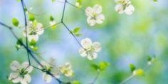 Mời các bạn xem bộ sưu tập những hình nền hoa đẹp và cùng tải hình nền hoa đẹp HD này về để trang trí cho máy tính của mình thêm đẹp nhé. (Các bạn click chuột vào hình nền mà mình cảm thấy ưng ý nhất để tải về máy tính nhé)