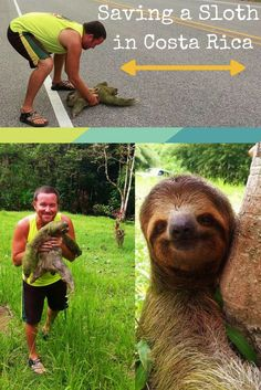 Saving a sloth's life in Costa Rica by helping him cross a busy highway.