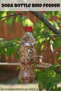 Soda Bottle Bird Feeder