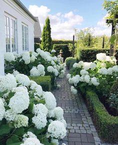 hydrangea garden care Garten a - gardencare Hydrangea Care, Hydrangea Not Blooming, White Hydrangeas, White Agapanthus, Garden Types, Hydrangea Landscaping, Garden Landscaping, Landscaping Ideas, Backyard Ideas