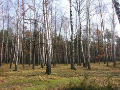 Las w Międzylesiu. To jest dobre miejsce na piknik.