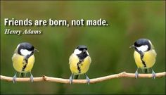 Friends are born, not made..........