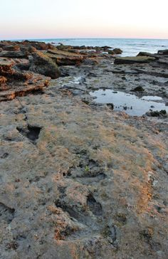 Dinosaur tracks exposed by low tide at Broome's Gantheaume Point, Western Australia . via lifeofdearbh.com #australia #broome