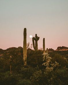 Uhrwerk Berlin – www.berlin time to roam the world Desert Aesthetic, Desert Dream, Desert Sunset, Life In Desert, Sonora Desert, Adventure Is Out There, Belle Photo, Beautiful World, Beautiful Places