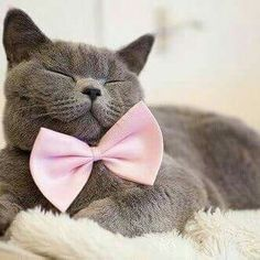 Look at that bow and how that kitty is smiling
