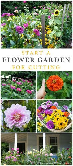 My favorite flowers for a cutting garden!  Easy to start, blooms all season long, great for cutting and filling your garden with color! Dahlia, zinnia, sunflower, daisy, and other hardy, low-maintenance plants with LOTS of flowers.