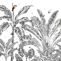 Les Dominotiers (@lesdominotiers) posted on Instagram • Mar 3, 2021 at 5:30am UTC Tropical Forest, Exotic Birds, Rooster, Black And White, Animals, Instagram, Art, Art Background, Animales