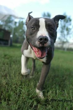 Moe is #adoptable at #CACC adoptable pets on Facebook.  So many pups to choose from!