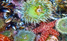Top Ten Places to Tidepool in California's Marine Protected Areas