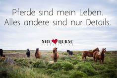Pferde sind mein Leben. Alles andere sind nur Details.  #pferde