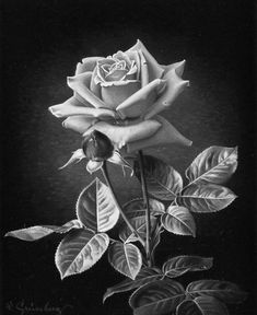 Trendy flowers drawing black and white tattoo ideas ideas Pencil Drawings Of Flowers, Drawing Flowers, Painting Flowers, Rose Drawings, Mago Tattoo, Rose Drawing Tattoo, Black And White Roses, White Art, Realistic Rose