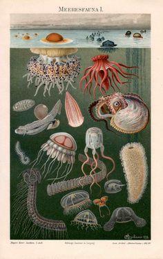 LOVE!! 1889 sea fauna I ocean scene original antique sea life print. $80.00, via Etsy.