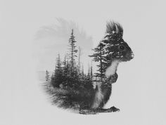 Poster | SQUIRREL (BLACK & WHITE von Andreas Lie | more posters at http://moreposter.de