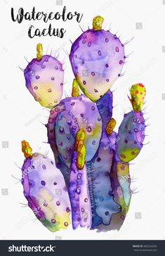 Wildflower cactus in a watercolor style. Full name of the plant: cactus. Aquarel Wildflower cactus in a watercolor style. Full name of the plant: cactus. Cactus Drawing, Cactus Painting, Cactus Art, Cactus Flower, Cactus Plants, Indoor Cactus, Cactus Decor, Watercolor Succulents, Watercolor Cactus