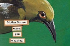 The Classes As Troubled Birds Barbarian Bard Cleric Druid Fighter Monk Paladin Ranger Rogue Sorcerer Warlock Wizard BONUS: Mystic Artificer Bird Meme, Bird Quotes, Youre My Person, Funny Birds, The Villain, Reaction Pictures, Mother Nature, Mother Earth, Dumb And Dumber