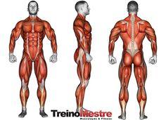 Hipertrofia muscular - treino e dieta