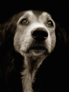 Photographer Traer Scott presents a heartbreakingly poignant look at shelter dogs waiting to find their forever homes.