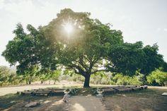 cerimônia embaixo de árvore