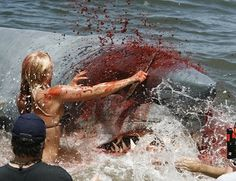 Attack Real Sharks Eating People