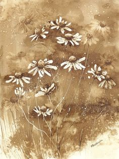 Rumianki - watercolour painted with coffee - Maria Roszkowska Coffee Artwork, Coffee Painting, Coffee Drawing, Tea Art, Vintage Flowers, Watercolour Painting, Painted Rocks, Marathi Calligraphy, Daisy