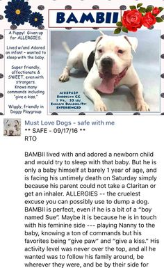 HAAAAPPYYYY❤️❤️❤️❤️❤️ THANK YOU SO MUCH FOR SAVING THIS STUNNING WONDERFUL BOY❤️❤️❤️ SAFE❤️❤️ 10/15/16 BY SECOND CHANCE RESCUE❤️❤️❤️❤️❤️❤️ RETURN 10/12/16 THIS IS HORRIBLE!! SHAME ON YOU ADOPTER! THIS PUPPY NEEDS LOVE, CARE AND TO DECOMPRESS !! HE HAS FEELINGS TOO YOU KNOW! SAFE AGAIN❤️❤️❤️❤️❤️ 10/8/16❤️❤️ PLEASE LOVE HIM FROM EARTH TO MOON AND BACK FOREVER❤️❤️❤️❤️❤️ RETURNED 10/3/16 CHILDCONFL !!! SUPER URGENT - RTO SAFE 9/17/16❤️ THANK YOU FOR COMING BACK FOR HIM❤️ HE'S A REAL DIAMOND ❤️❤️…