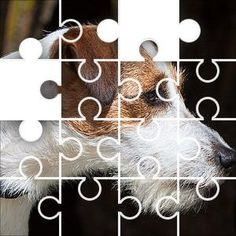 Jack Russel R Jigsaw Puzzle, 67 Piece Classic. Jack Russel dog looking to the right, white and brown on
