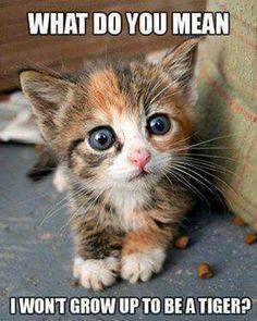 Cute Kittens Newborn Cute Cats And Kittens For Sale Cute Kittens, Cats And Kittens, Kitty Cats, Baby Kitty, Cute Kitten Meme, Cats In Hats, Kittens Meowing, Baby Pig, Lps Cats
