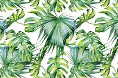 Rainforest tropical set - Illustrations - 7