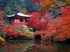"""Fall in Kyoto, Japan. Kyoto was Japan's long-time capital, and is known especially for its temples and beautiful autumns. In fact, Kyoto means """"capital city,"""" and it kept its name even after the government was moved to Tokyo in Kyoto Japan, Japan Japan, Japan Trip, Japan Sakura, Okinawa Japan, Places To Travel, Places To See, Travel Destinations, Places Around The World"""