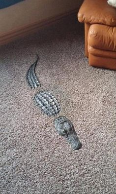Post with 1291 votes and 58111 views. Tagged with awesome, alligator; Now that is super awesome. Cool Ideas, Funny Taxidermy, Taxidermy Decor, Interior Decorating, Interior Design, My Room, Cool Furniture, Home Improvement, Sweet Home
