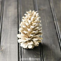 Bleached pinecones have a weathered, soft patina that's perfect for holiday crafting. Follow this easy guide on how to bleach pine cones for decor.