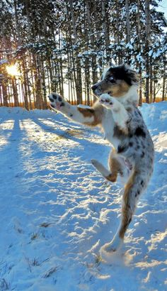 Ready Set JUMP!! by Alissa Berthiaume on Capture Minnesota // Cooper the puppy showing off his athletic skills.