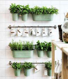 Как вырастить огород на кухне: 10 впечатляющих идей — Полезные советы