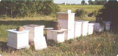 Backyard beehives.
