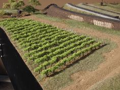 How to Plant an N-scale Vineyard | Model Railroad Hobbyist magazine | Having fun with model trains | Instant access to model railway resources without barriers