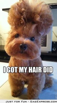 Cutest Hair Cut Ever!