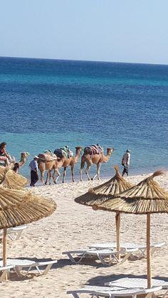 Tunisia - Hammamet 2013